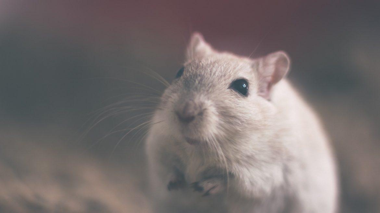 Ten Dead Rats Rules Update